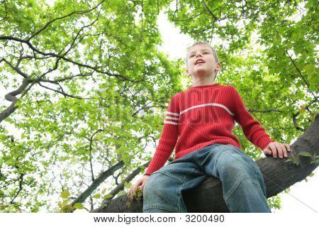 Boy Sits On Tree