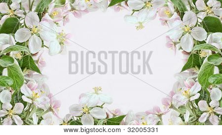 Spring apple blossom borders on pink background
