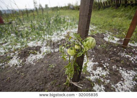 Hail Storm Disaster In Garden