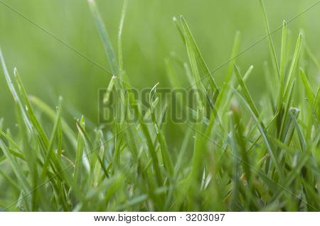 Green Green Gras