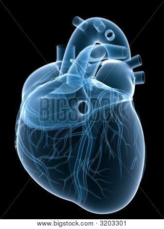 Corazón de rayos x