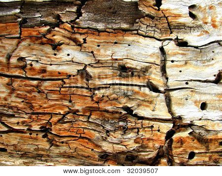 Macro photo of tree trunk