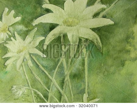 Flannel Flower in watercolor on paper