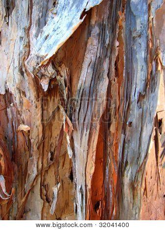 Paperbark Tree Textures