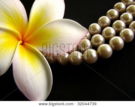 Frangipani with Pearls 4