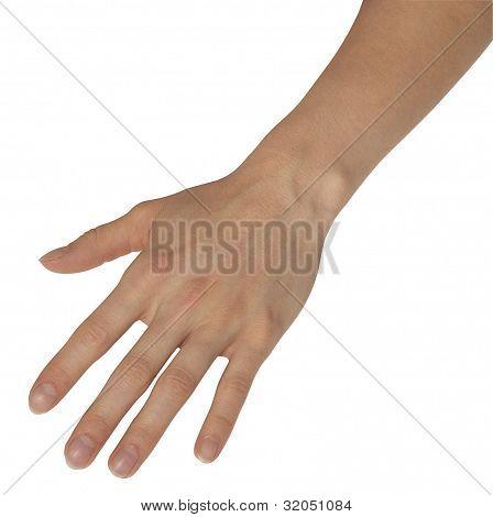 Relaxed Feminine Hand
