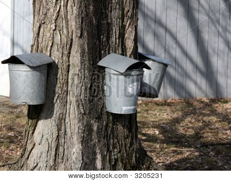 Sap Buckets - Maple Syrup