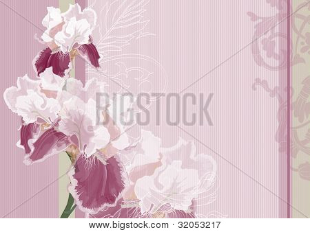 Irises On A Pink Background