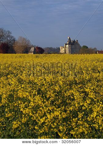 Motte Castle At Sunrise From A Rapeseed Field In Spring, Usseau ,  France.