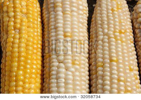 Maize cobs