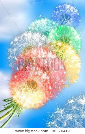 Dandelion Flowers On Blue Sky Background