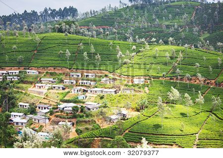 village among tea plantation