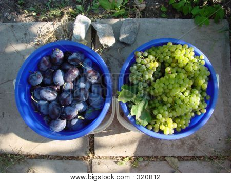 Wine Grapes And Plums