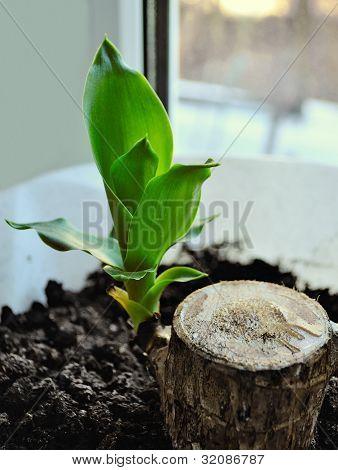Green Leaves Houseplant.