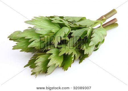 Fresh lovage on a white background
