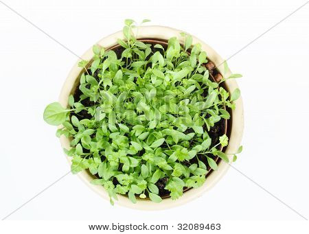 Spring Vegetable In Ceramic Pot On White