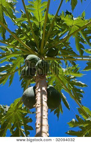 Bunch Of Papayas