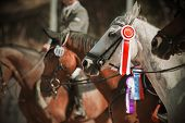 Awarding The Winners Of Equestrian Competitions In The Equestrian Ranks, Where Among The Majority Of poster