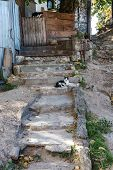 Old Open Exterior Stone Staircase. Stone, Cement Steps Of An Old Staircase With Traces Of Weathering poster