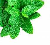 Mint Leaves Isolated On White Background. Heap Of Spearmint Leaves, Peppermint, Close Up poster