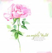 pic of windflowers  - Painted watercolor card with rose and text - JPG