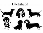 Dachshund Set. Collection Of Pedigree Dogs. Black White Illustration Of A Dachshund Dog. Vector Draw poster