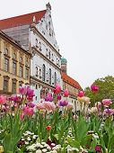 Flower Pot With Tulips And Bellis, Pedestrian Area Munich Marienplatz, St Michael Church And Famous  poster