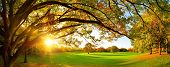 Beautiful Panoramic Autumn Scenery With A Large Tree On A Green Meadow And The Setting Sun Shining T poster