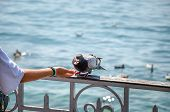 Woman Hand Feeding Pigeon By The Lake. Water In The Background. Feeding Pigeons, Animals. Birds In T poster