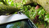 A Tree Fell On A Car During A Hurricane. Broken Tree On A Car Close-up poster