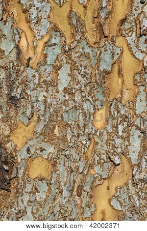 Patchy Tree Bark
