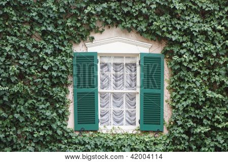 Ivy covered old fashioned window