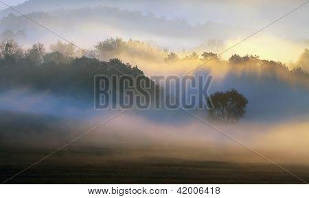 Spring Mist, Trees Are Wet, Damp Fog Of Forest