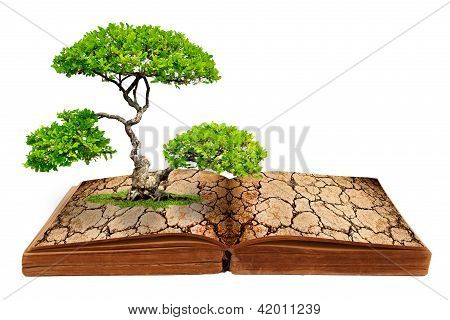 Then Tree Growth From A Book With Cracked Ground Texture