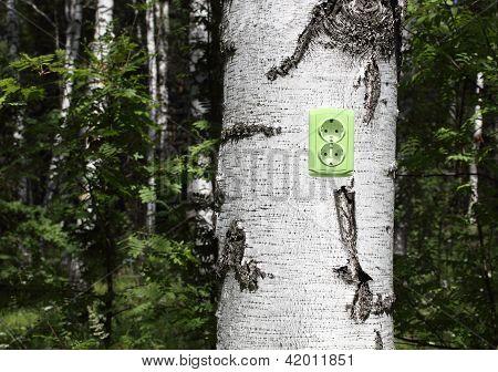 Receptáculo de energia em uma árvore