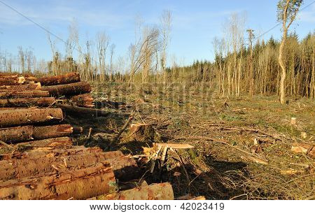 Destroyed Forest