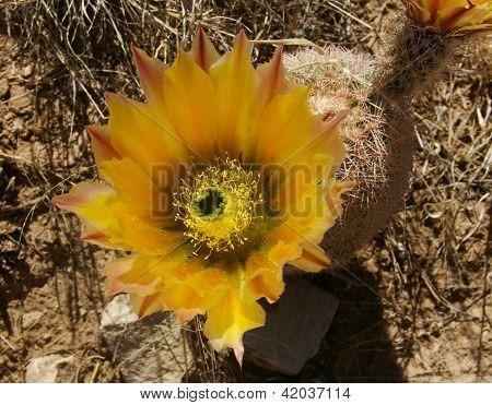 NM rainbow cactus