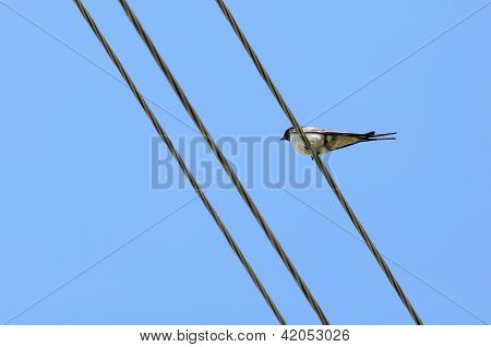 Swallow Sitting On Wire Against Blue Sky