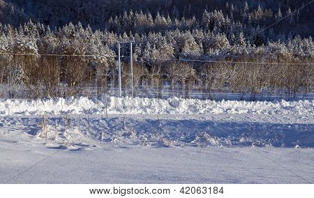 Poles and trees and snow