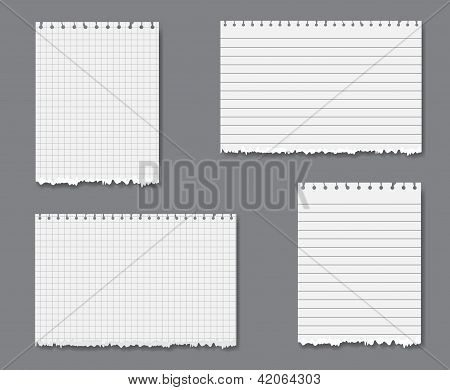 Vector Set With Lined And Graph Paper