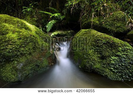 Small flowing stream, New Zealand
