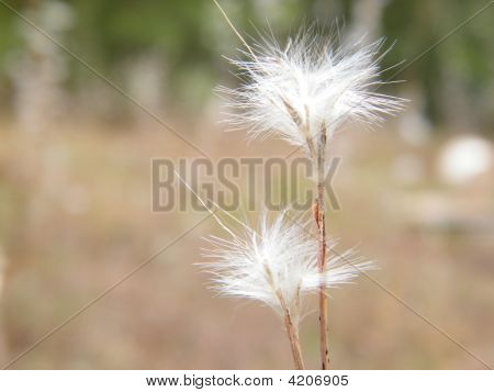 poster of Fluffy Grass