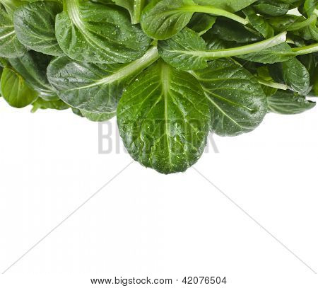fresh green leaves spinach or pak choi isolated on a white background