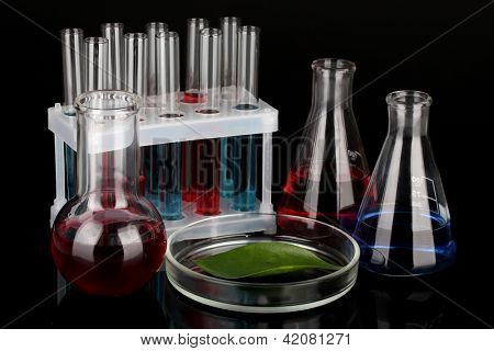 Test-tubes and green leaf tested in petri dish, isolated on black