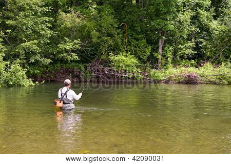 Fisherman catches of salmon fly fishing in the river.