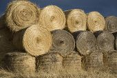 Haybales In Soft Autumn Evenign Light poster