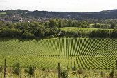 pic of dork  - View across the town of Dorking in Surrey - JPG