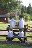 foto of olden days  - Milk churns displayed on the road side with flower arrangements outside a farm in Sweden - JPG