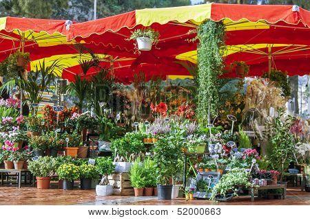 Monaco , the flower market under the open sky
