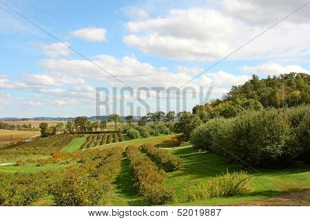Sweeping Apple Orchard Landscape